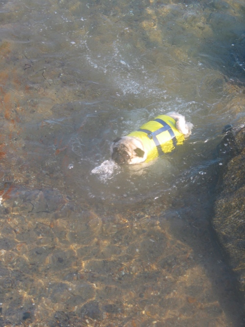 I swam for you in a horrible life vest.