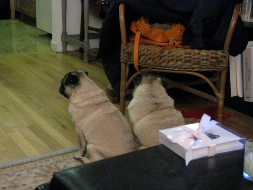 Here we are, captured by the pug cam, waiting for Billy.