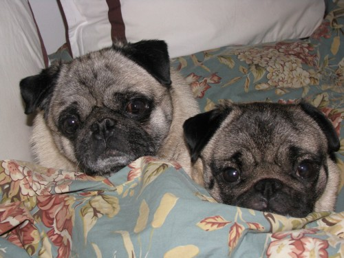 """Here Lizzie and I are """"keepin' it real"""" in bed Saturday morning."""