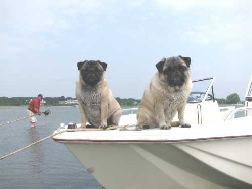 Here we are last summer out clamming on Grandpa's boat. See how patient and alert we were.