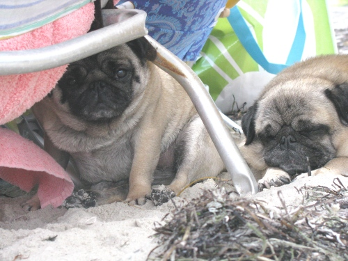 """Our """"under the boardwalk"""" moment, only we use beach chairs for shelter"""