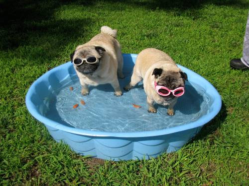 Here we are in our pool. I am clearly one with the moment and Lizzie is, well, not.