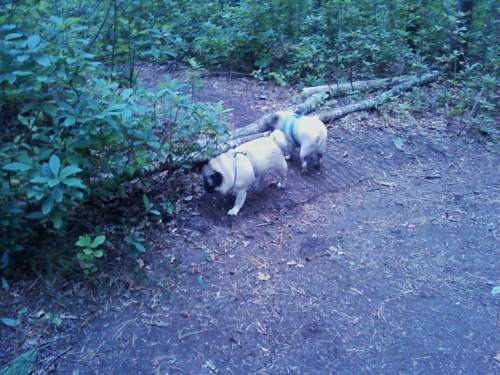 Here we are exploring a side trail. Again, Lizzie is blurry, but who cares?