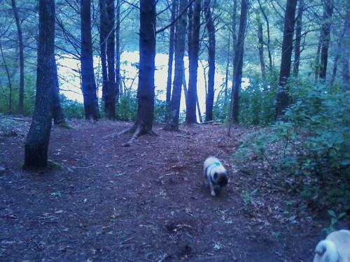 Lizzie on a trail leading to the shore. She is blurry, but who cares?