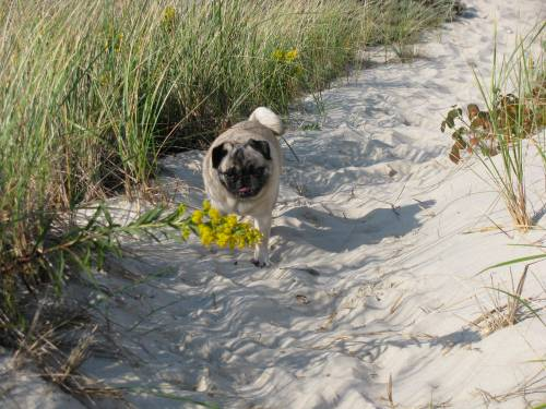 Here I am out at the island yesterday, exploring the flora in the dunes.
