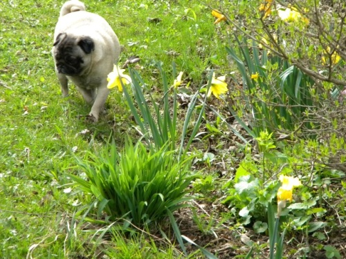 Taking time to smell the flowers....